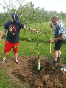 Positioning the apple tree